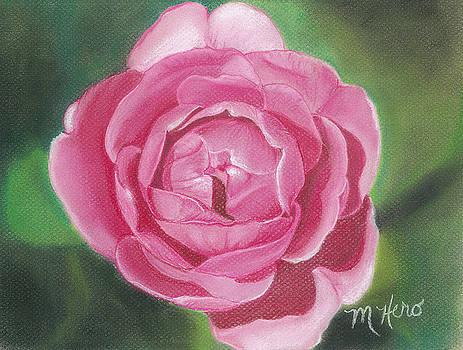 Gertrude Jekyll Rose by Marcia  Hero