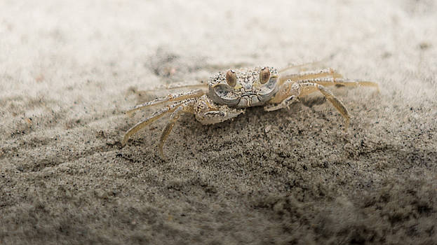 Ghost Crab by Brent Paape