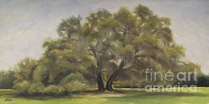 Jindra Noewi - Giant Oak