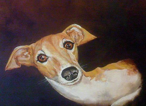 Ginger by Patti Lane