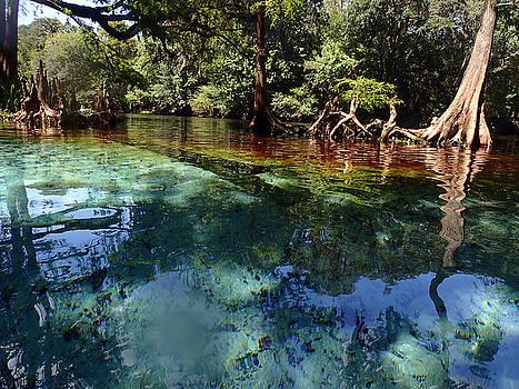 Ginnie Springs by Farol Tomson