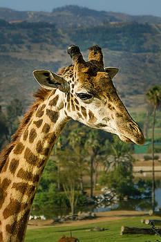 Giraffe by April Reppucci