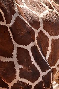 Giraffe Study 02 by John Knapko