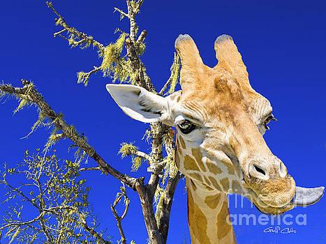 Giraffe up Close. Original exclusive photo art. by Geoff Childs