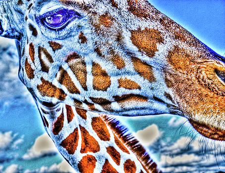 Giraffe Whiskers by Barbara Kelley