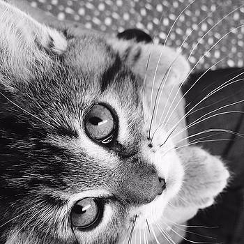 Gizmo in Black and White by Annette Bingham