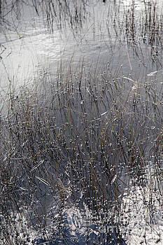 Glades 2 by Richard Smukler