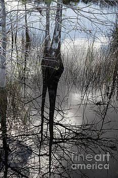 Glades 5 by Richard Smukler