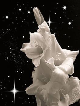 Gladiolas in Space by Farol Tomson