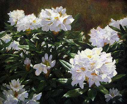 Gleaming Rhododendrons by Linda Jacobus