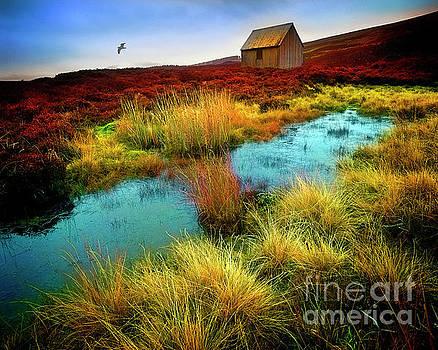Glen Cochill by Edmund Nagele