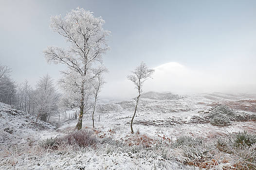 Glen Shiel Misty Winter Trees 2 by Grant Glendinning