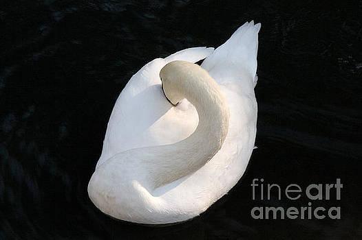 Gliding Swan by Julia Hiebaum