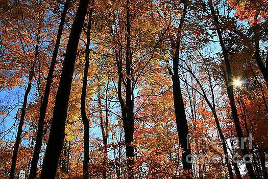 Glorious Fall by Karen Adams