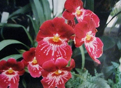 Glorious Fleur by Judyann Matthews