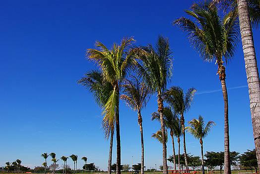 Glorious Palms by Zalman Latzkovich