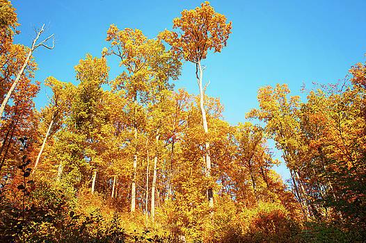 Jenny Rainbow - Glory of Golden Autumn