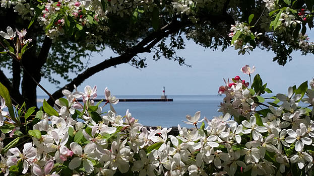 Glory of Spring at the Waterfront by Wendy Shoults