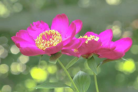 Glow Blossoms by Deborah  Crew-Johnson