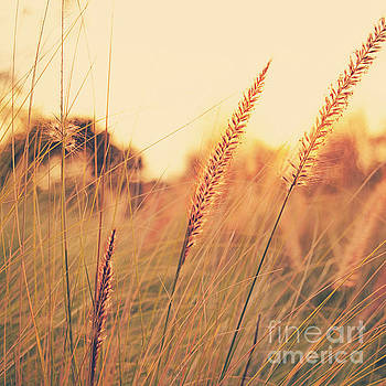 Glowing Fountain Grass - Hipster Photo Square by Charmian Vistaunet