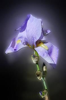 Glowing Purple by Marinela Feier