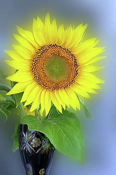 Glowing Sunflower by Marinela Feier