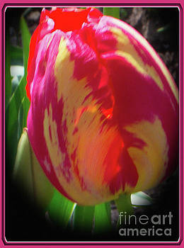 Glowing Tulip by Ansel Price