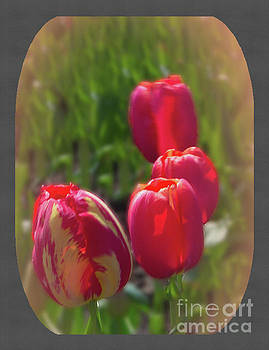 Glowing Tulips 3 by Ansel Price
