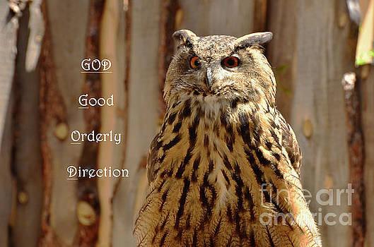 God Equals Owl by Debby Pueschel