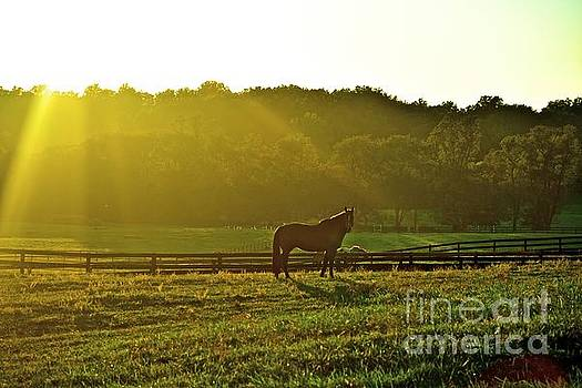 God's Country by Tracy Rice - Photographer