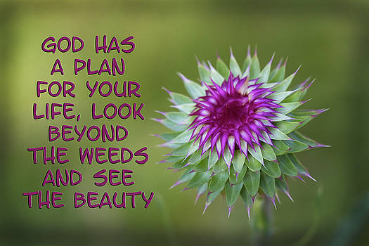 God's Plan by Kathy Clark