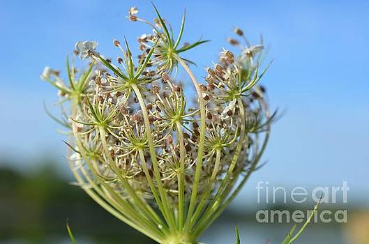 Going to Seed by Lila Fisher-Wenzel