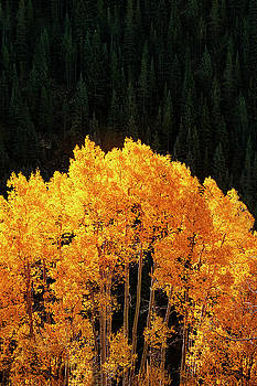 Golden Autumn by Andrew Soundarajan