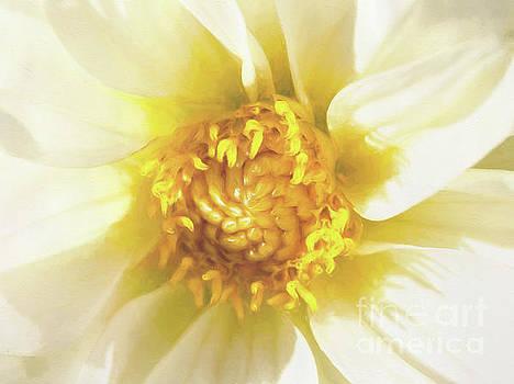 Golden Centre by Kim Andelkovic