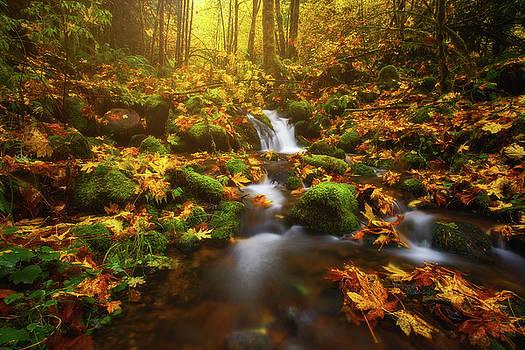 Golden Creek Cascade by Darren White