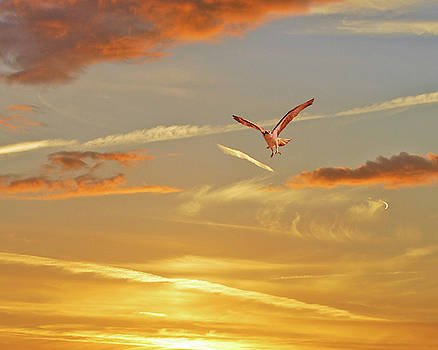 Golden Flight by Adele Moscaritolo