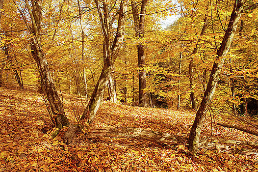Jenny Rainbow - Golden Forest