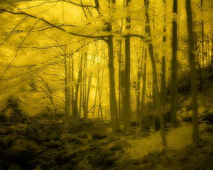 Golden Haze by Gothicrow Images