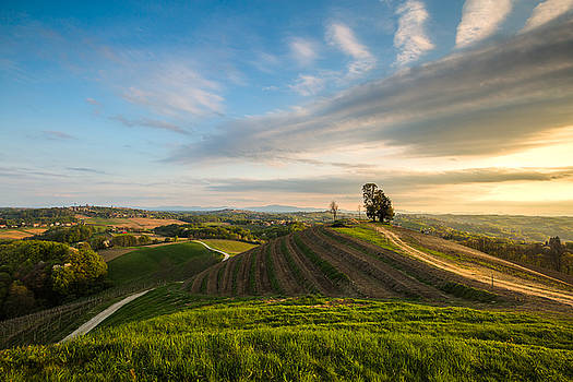 Golden hour on hill by Davorin Mance