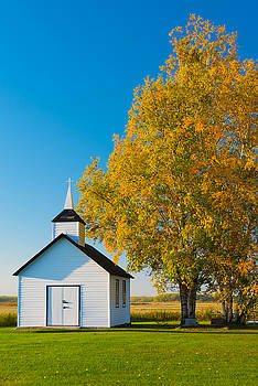 Golden In Autumn by Nebojsa Novakovic