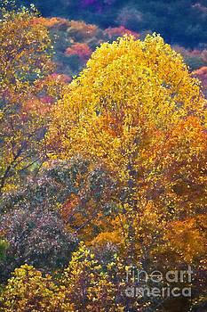 Golden Leaves by Doug Sturgess