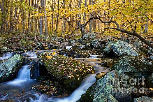 Golden Leaves South River by Sean Cupp