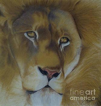 Golden Lion by Amy Hodgkinson