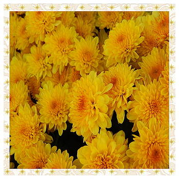 Golden Mums by Susan Ince