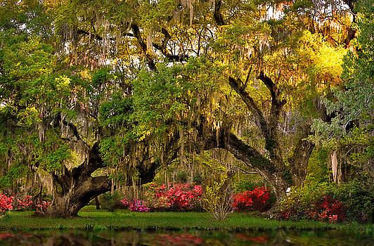 Golden Oaks by Lj Lambert