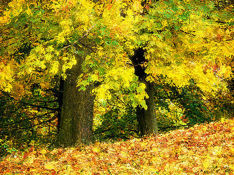 Angela Doelling AD DESIGN Photo and PhotoArt - Golden October