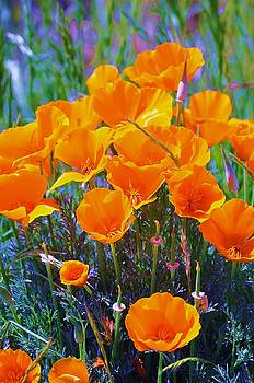 Golden Poppies by Katia Creole Art