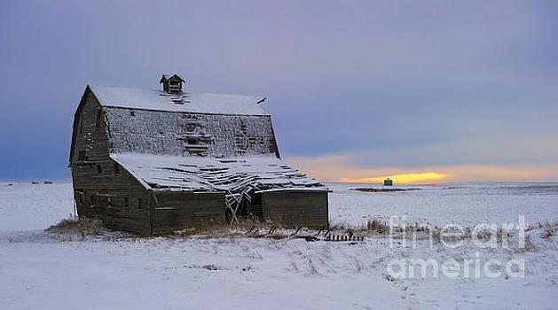 Golden Prairie Hours.. by Nina Stavlund