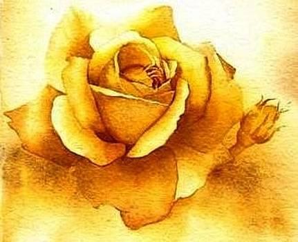 Golden Rose by Sandra Phryce-Jones