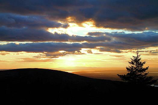 Golden Sky by Scott  Bricker